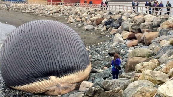 beached-whale